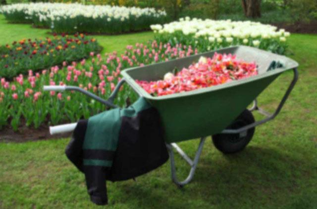 Garten Neupflanzungen