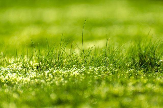 Rasenanlage Rasenpflege